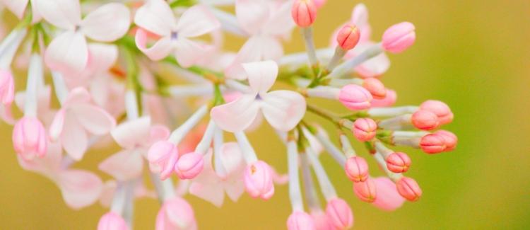 flower-3306678_1920
